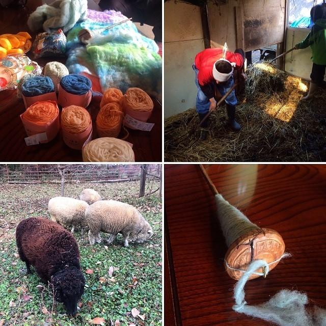 羊毛.jpg